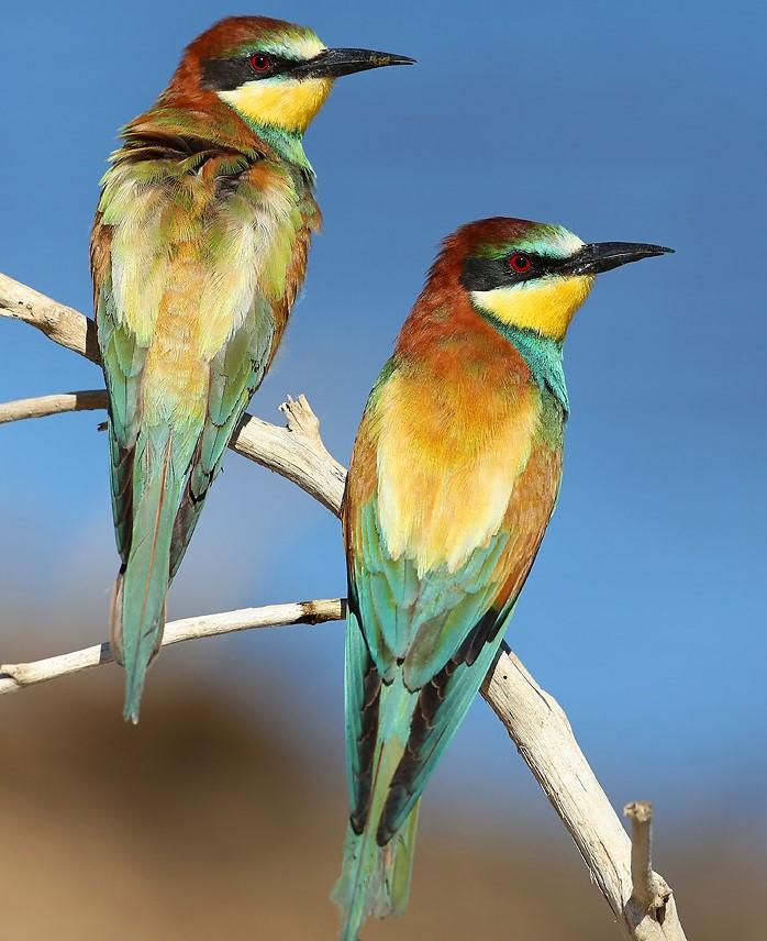 Image Balade matinale à la découverte des oiseaux aux Salins d'Hyères - LPO