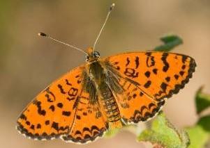 Image Visite guidée du jardin à papillons : le jardin du Pacha