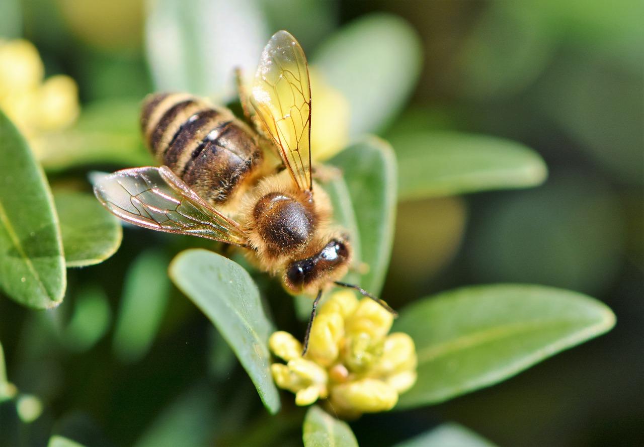 Image Atelier sur le thème : Le monde des abeilles