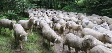 Image Journée avec un troupeau