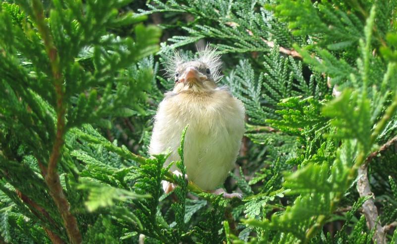 Image Observation des oiseaux du lac