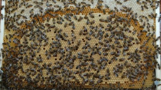 Image La Maison de l'abeille