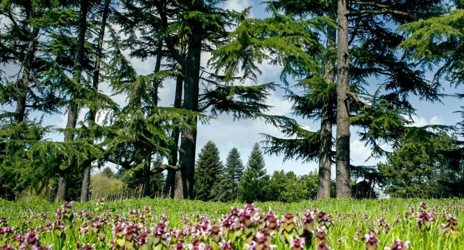 Image Arboretum de Chèvreloup