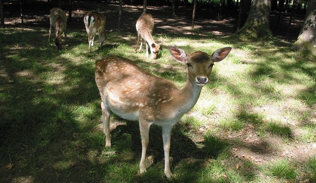 Image Parc animalier de la Maladière