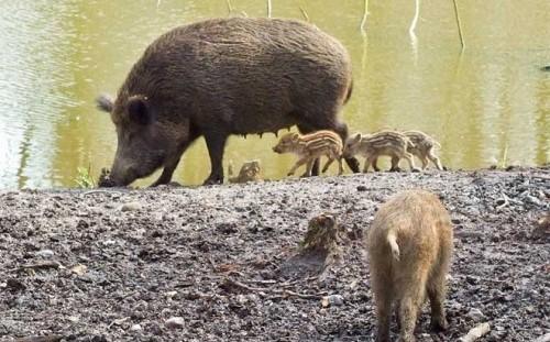 Image Parc animalier de l'ONF