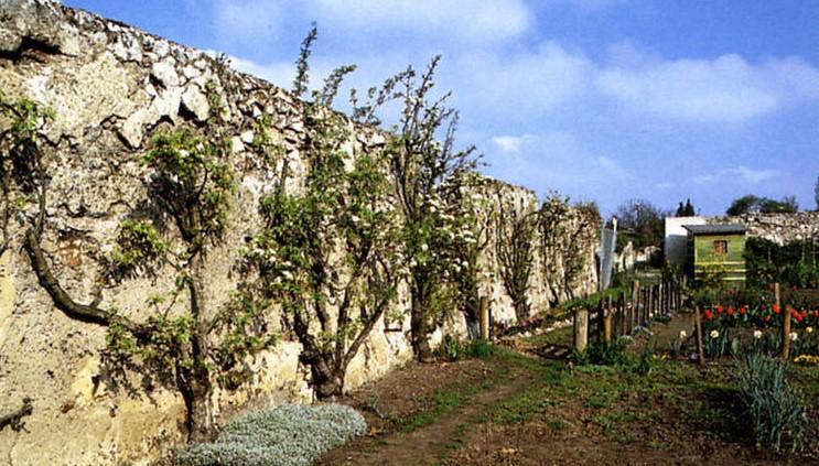 Image Les murs à pêches de Montreuil et jardins