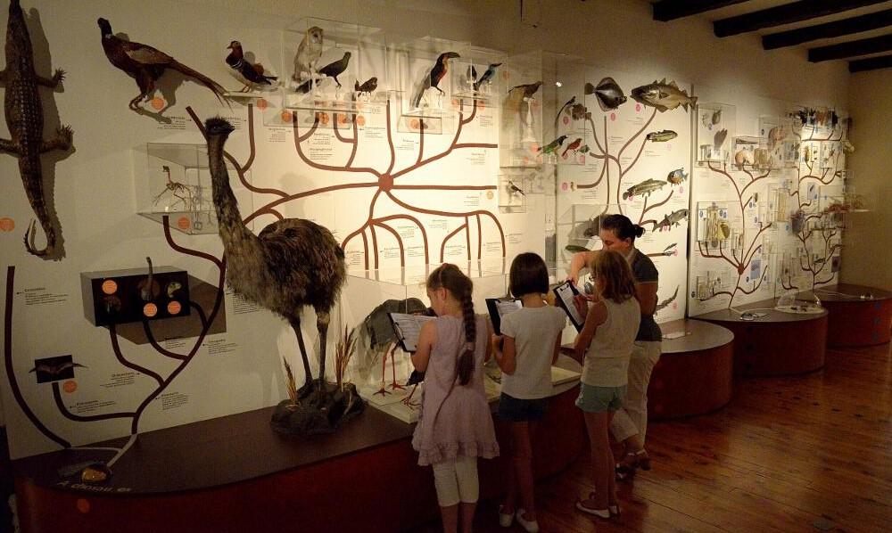 Image Muséum d'histoire naturelle Henri Lecoq