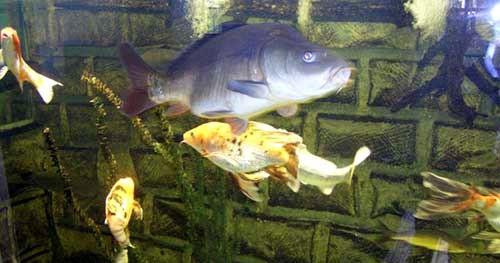 Image L'aquarium de la maison de la nature