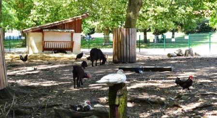 Image Le parc animalier René Canivenc, Le Moulineau
