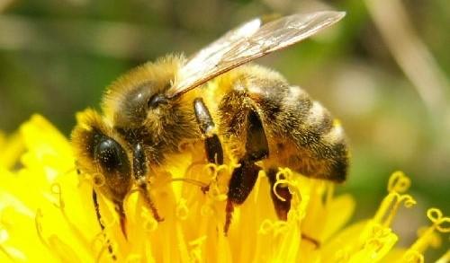 Image Musée des abeilles et de l'apiculture