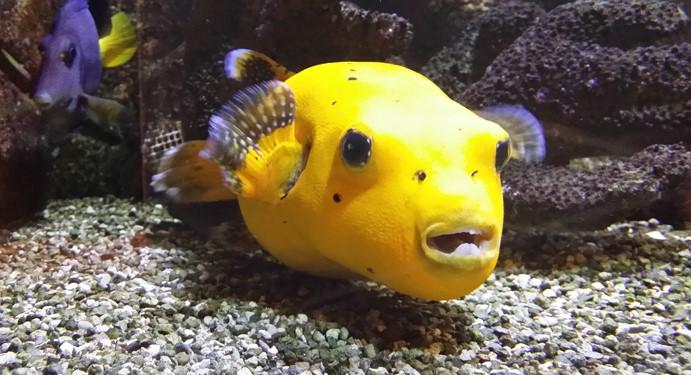 Image Aquarium municipal de Dunkerque