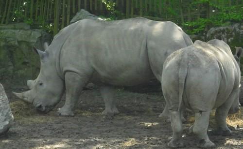 Image Zoo de Lille