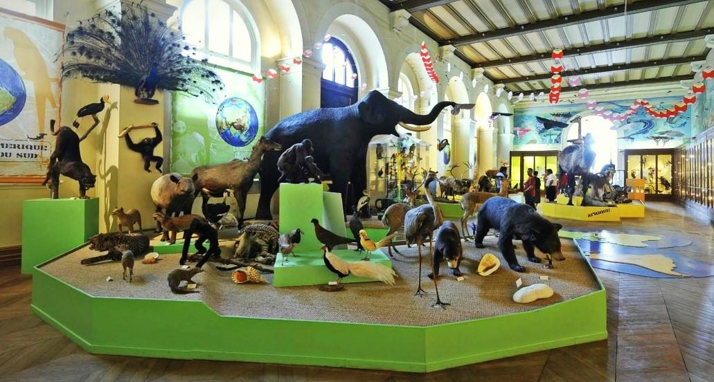 Image Muséum d'Histoire Naturelle