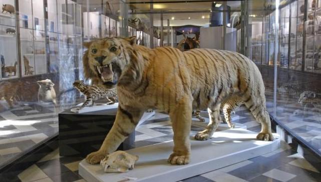 Image Muséum d'histoire naturelle de Nîmes