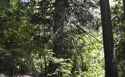 Image Arboretum de La Foux