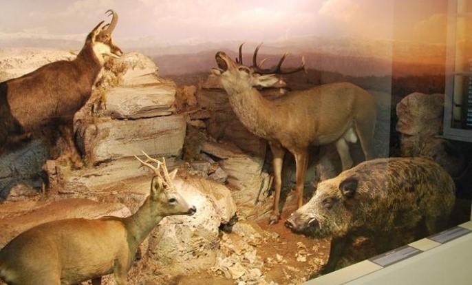 Image Museum d'Histoire Naturelle