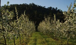 Image Cueillette de pommes Domaine de la Portanières