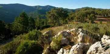 Image Ballade : la piste des pins Pignon