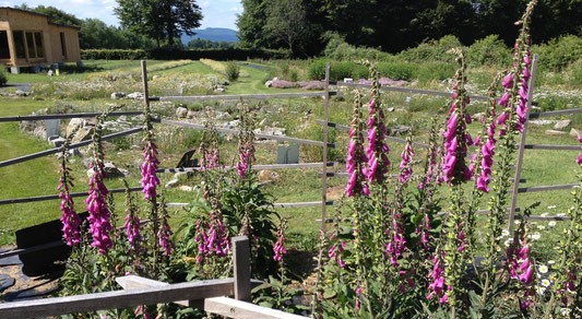 Image La Maison du Miel et des Plantes