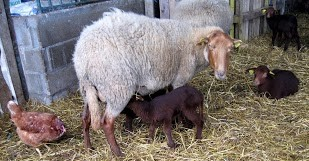 Image Ferme biologique et pédagogique Saute Mouton