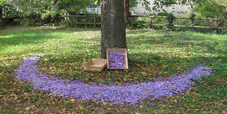 Image Ferme des Violettes
