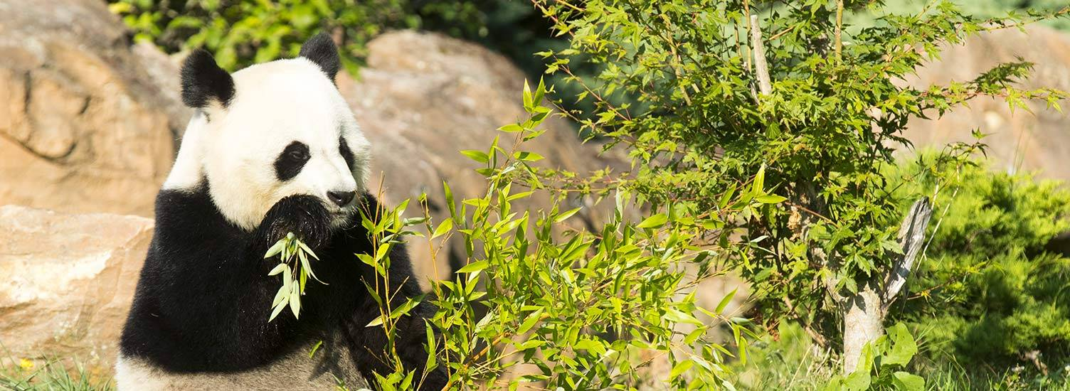 Image Zoo Parc de Beauval