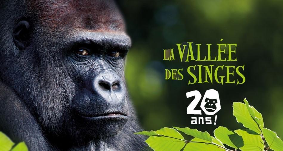 Image La Vallée des Singes