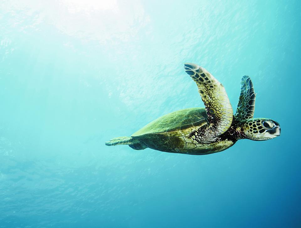Image Aquarium de La Rochelle