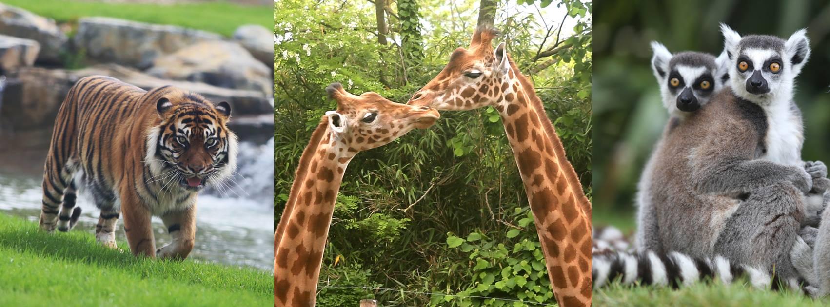 Image Zoo de Champrepus