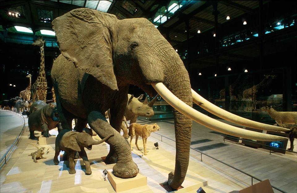 Image Grande Galerie de l'Evolution