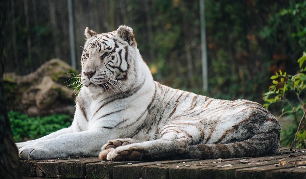 Image Touroparc Zoo