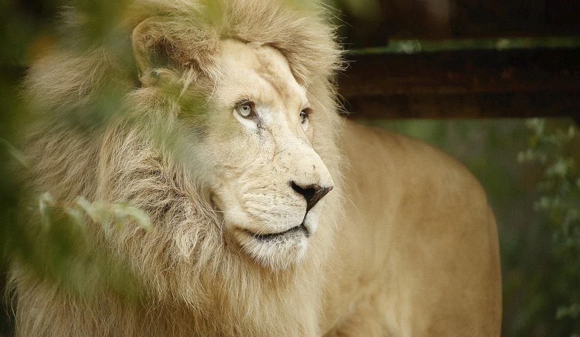 Image Zoo d'Amneville