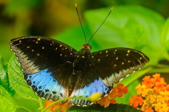 Image La serre aux papillons